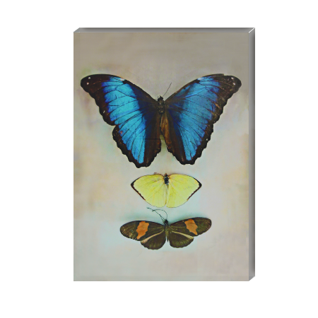 Canvas Wall Art - Blue Butterfly