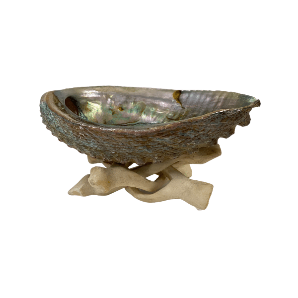 Natural Abalone Shell with Tripod